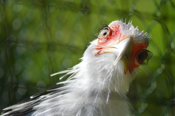 bird-2758915_1920
